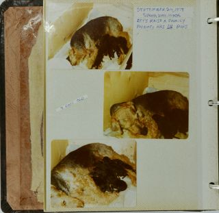 [Photo Album]: Vintage Photo Book Documenting the Lives of Two Airedale Terriers