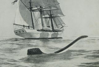 The Case for the Sea-Serpent